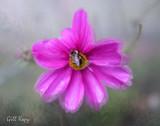 Bee n_Dreamscape