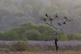 Black Kite / Sort Glente, 1X8A5886,08-02-19.jpg