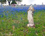 Texas Wildflowers 2021