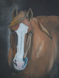 Pal - pastel on paper, 9 x 12  Client photo reference - 3-2019