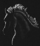 Silhouette horse - pastel on paper, 11 x 14 Photo Reference Karen Broemmelsick, 2019