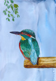 Kingfisher - alcohol ink on photo paper, 5.5 x 8. Photo reference Russ Bridges        11-2019