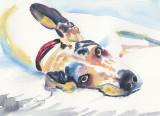 Dog study - watercolor, 5 x 7             2019