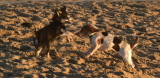 The doggie beach, Santa Cruz - October, 2020