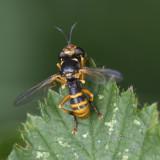 GALLERY Vliegen en Muggen - des Mouches et des Moustiques