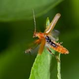 Insecten - bugs