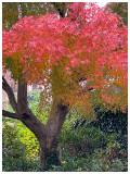 Autumn gown.jpg