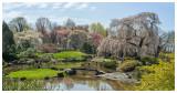 Japanese Tea Garden 2.jpg