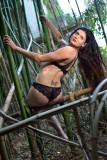 Bambous Land II