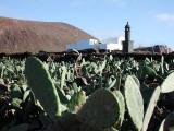 in village Guatiza,Lanzarote