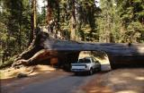 Sequoia Nat. Park