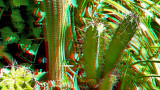 Flowers and Plants in 3D