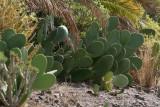 Gran Canaria4.jpg
