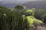 Gran Canaria9.jpg