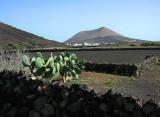 Lanzarote,la Geria