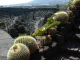 Jardin de Cactus - Cactus Garden in Lanzarote