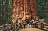 Sequoia NP2