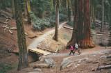 Sequoia NP1