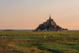 Le Mont Saint Michel et les moutons dans les près salés