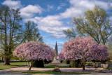 Les magnolias de la place de la République avec la cathédrale en arrière plan