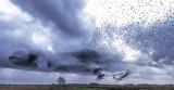 Spreeuwenzwerm  - starling swarm