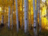 Utah Fall 2021