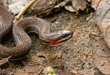 Snake Paz.jpg