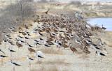 Birds Pacoa