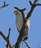 Raptors-Hawks and Eagles