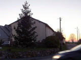 Histoire de sapins... Christmas tree story