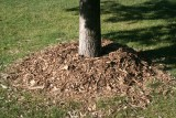 mulch_tree