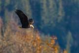 EagleFlight102819.jpg