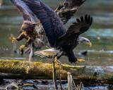 Eagles110519.jpg