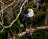 Eagle530Brdg102719_2.jpg