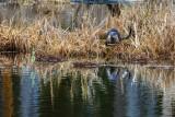 OtterBarnabySlough022420.jpg