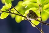 Sparrow070720.jpg