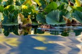 BeaverBarnabySlough071020.jpg