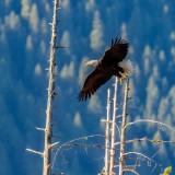 EagleBarnabySlough071520.jpg
