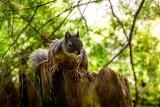 DuglasSquirrel.jpg