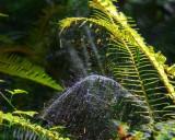 SpiderWeb081420_3.jpg