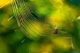SpiderWeb100820.jpg