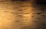 RaindropsBarnabySlough020321.jpg