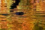 BeaverBarnabySlough041821_2.jpg