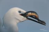 Little egret-CASCINA SPINOLA