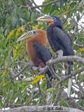 North Eastern India Birding April 2019.