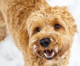 Snow dog day # 278 .jpeg