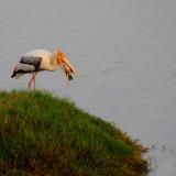 birds_of_tamil_nadu-india