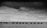 masai_mara_monochrome