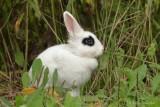 Lapin_Y3A1529 - Rabbit
