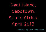 Seal Island, Capetown, South Africa (April 2018)